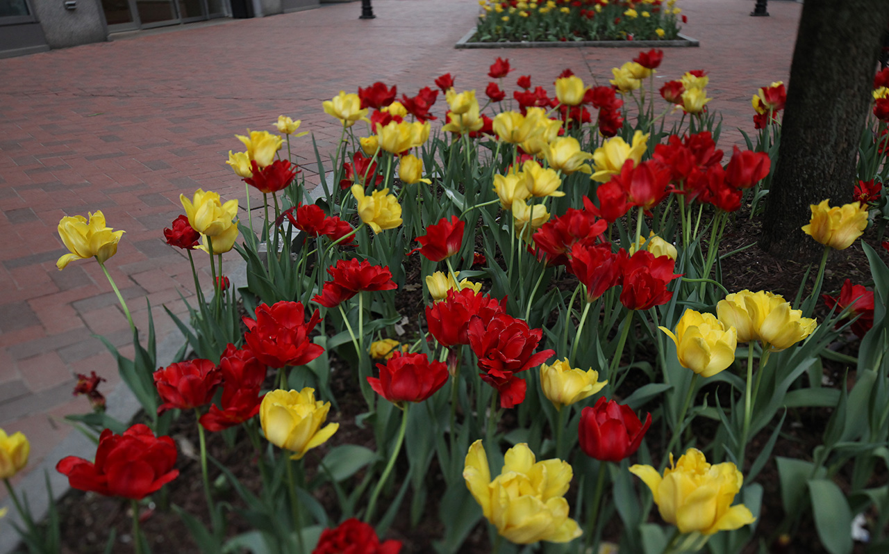 Click to Enlarge - Flowers in PPG Place